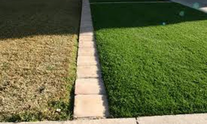 The grass greener because it is getting watered or because it is turf?
